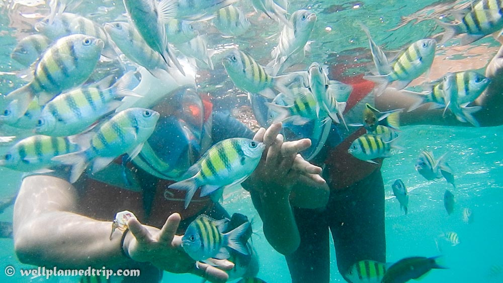 Snorkeling Elephant Beach, Havelock, Andaman